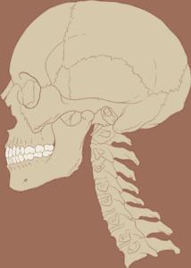 curva columna cervical cuello correcto
